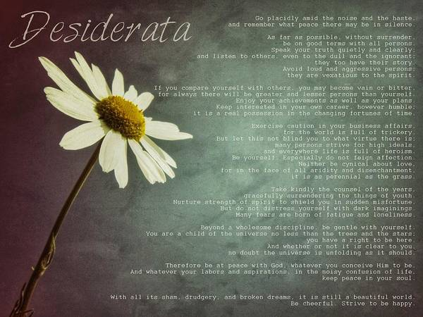 Quotation Photograph - Desiderata With Daisy by Marianna Mills
