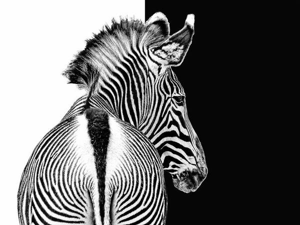Zebra Pattern Photograph - Designed By Nature by Joachim G Pinkawa