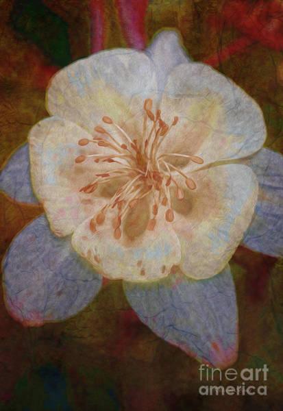 Photograph - Designer Floral by Deborah Benoit
