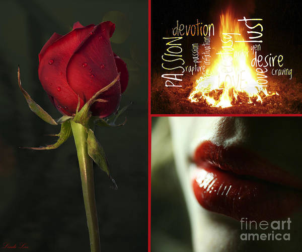 Passionate Photograph - Desire by Linda Lees