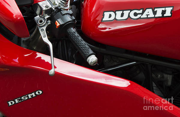 Photograph - Desmo by Tim Gainey