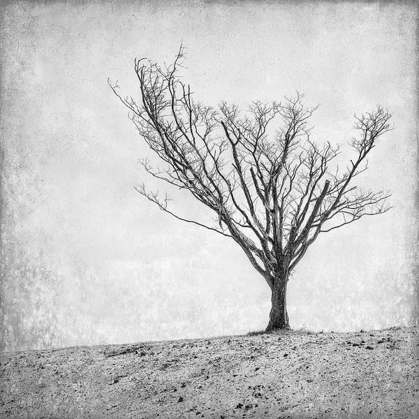 Reaching Photograph - Desperate Reach by Scott Norris