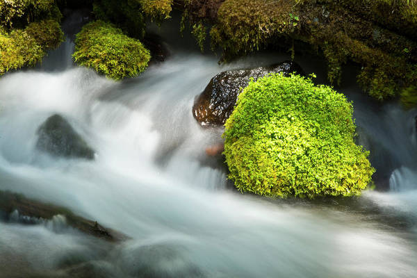 Clearwater Photograph - Detail, Clearwater Creek, Clearwater by Michel Hersen