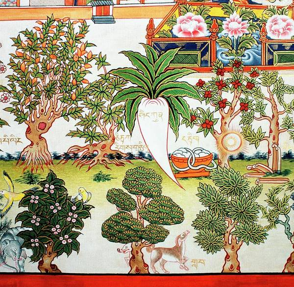 Tibet Photograph - Detail From A Tibetan Herbal Medicine Chart by Mark De Fraeye/science Photo Library