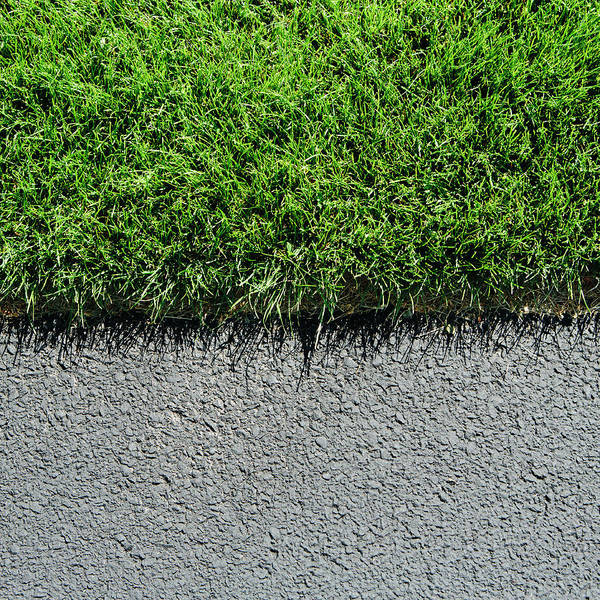 Toughness Photograph - Detail Of Lush, Green Grass And by Mint Images - Paul Edmondson