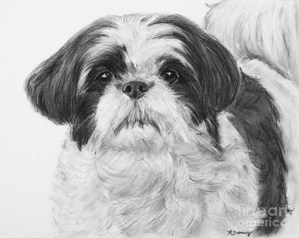 Art Print featuring the drawing Detailed Shih Tzu Portrait by Kate Sumners