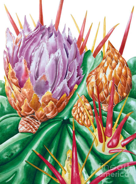 Painting - Devil's Tongue Cactus Flower by Kandyce Waltensperger