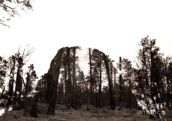 Photograph - Devils Tower Revealed by Anthony Wilkening