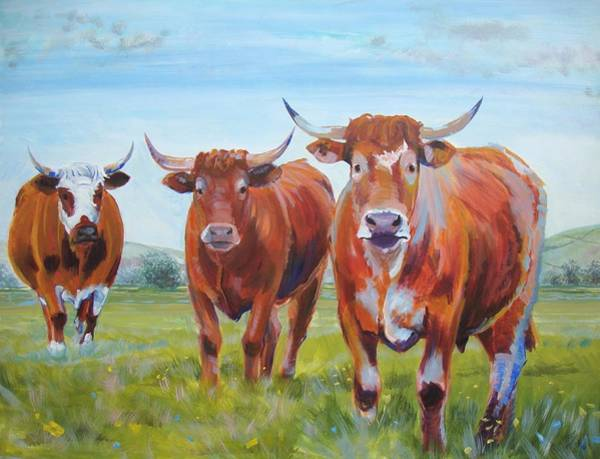 Devon Cattle Art Print
