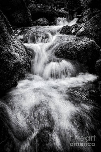 Gully Photograph - Devon River Monochrome by Tim Gainey