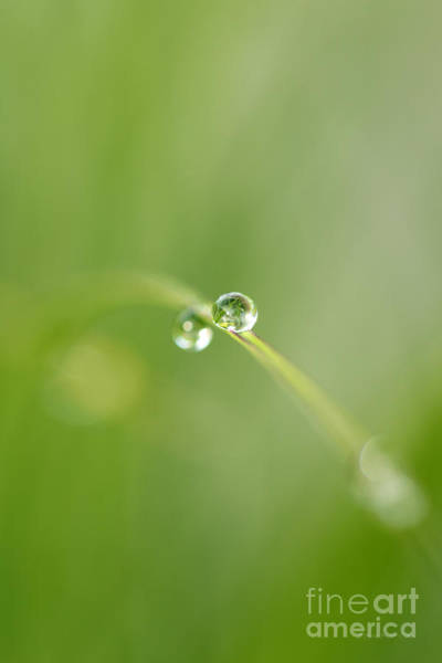 Photograph - Dew Drop by Beve Brown-Clark Photography