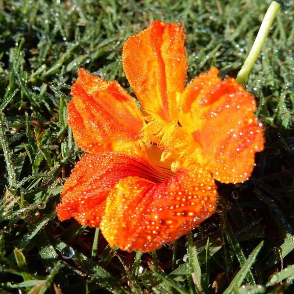 Photograph - Dew Kissed Flower by Pamela Walton