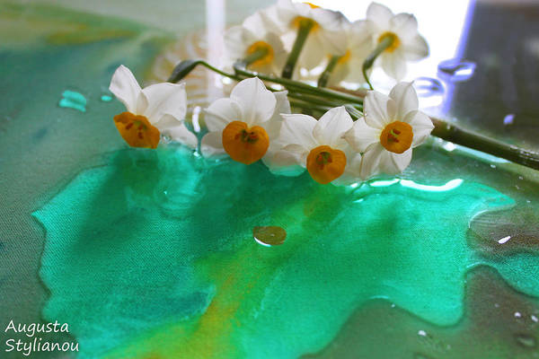Photograph - Dew Of Narcissus Flowers by Augusta Stylianou