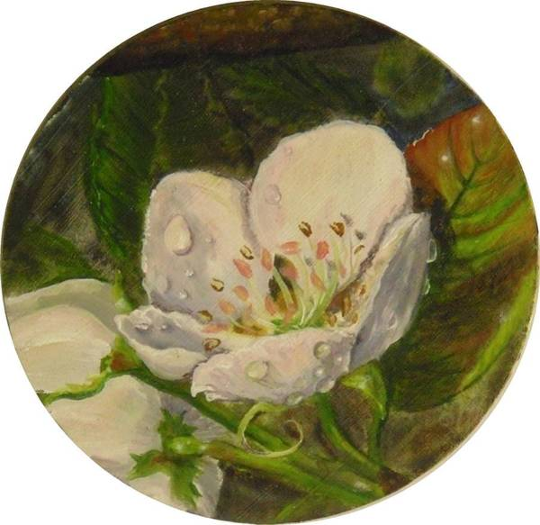 Painting - Dew Of Pear's Blooms by Nicole Angell
