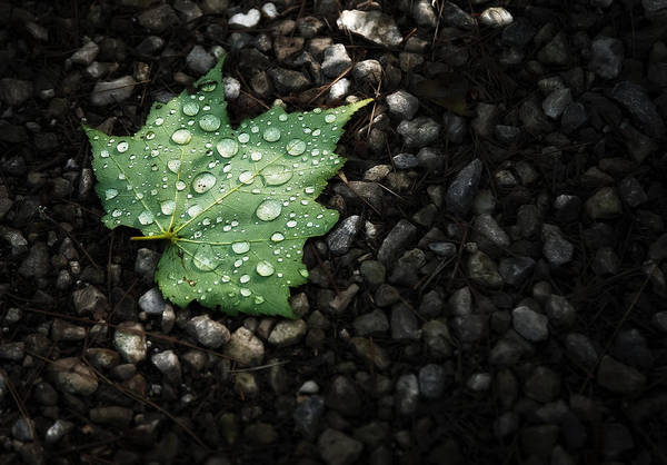 Dark Green Wall Art - Photograph - Dew On Leaf by Scott Norris