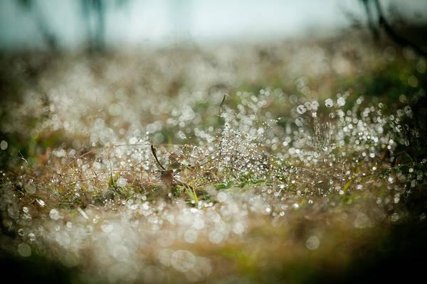 Photograph - Dewdrops At Sunrise by Raimond Klavins