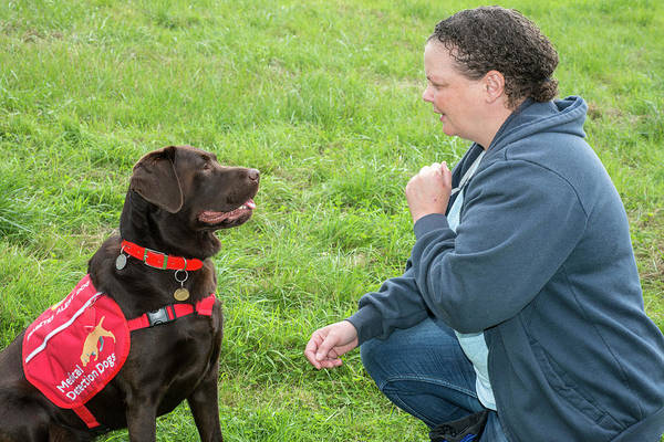 Dog Training Photograph - Diabetes Alert Assistance Dog And Owner by Louise Murray
