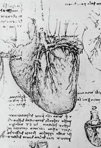 Wall Art - Photograph - Diagram Of Heart And Vessels By Leonardo Da Vinci by Science Photo Library