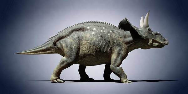 Diceratops Photograph - Diceratops by Sciepro