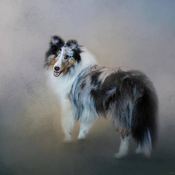 Photograph - Did You Call Me - Blue Merle Shetland Sheepdog by Jai Johnson