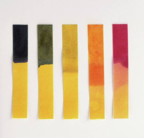 Alkali Wall Art - Photograph - Different Coloured Strips Of Litmus Paper by Dorling Kindersley/uig