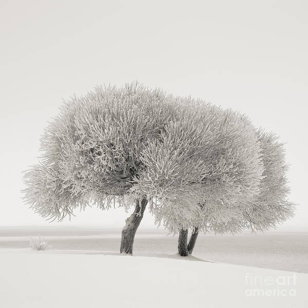 Different Season Art Print