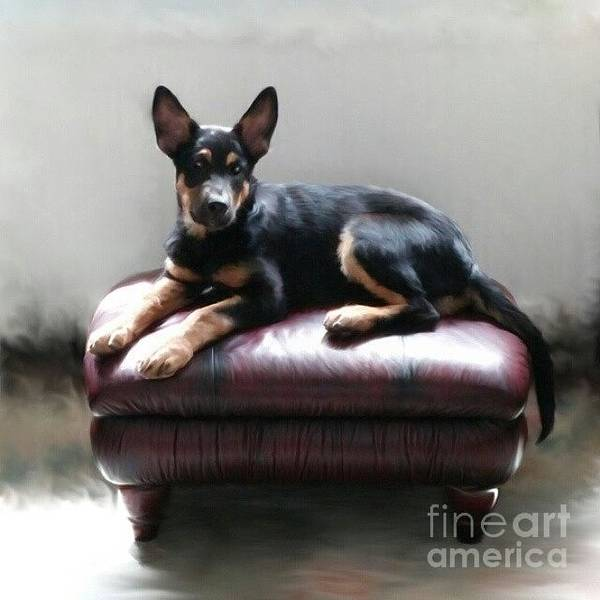 Dogs Wall Art - Photograph - Digital Art Print For Sale by Abbie Shores