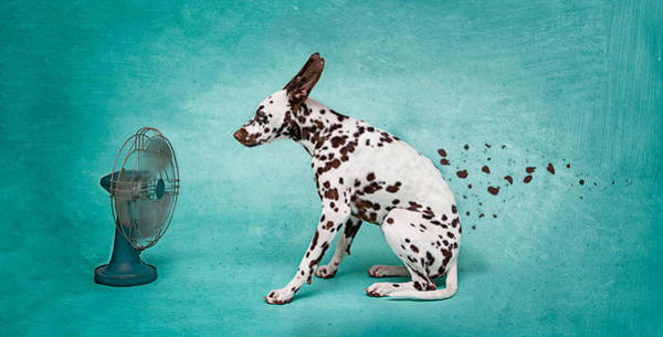 Dalmatian Dog Photograph - Digital Composite Image Of Electric Fan Blowing Dalmatian Spots Against Turquoise Background by Nathalie Deslauriers / EyeEm