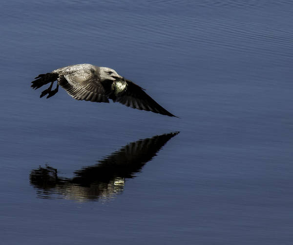 Wall Art - Photograph - Dinner On The Fly by Thomas Young