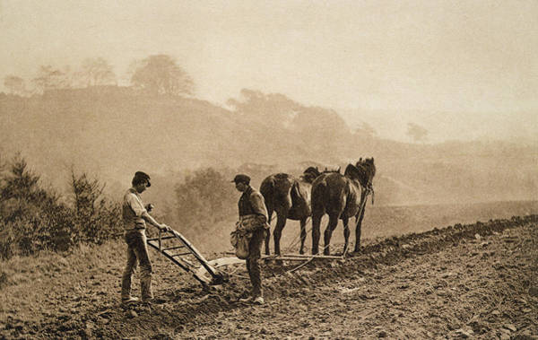 Plow Horses Photograph - Dinner Time by Frank Meadow Sutcliffe