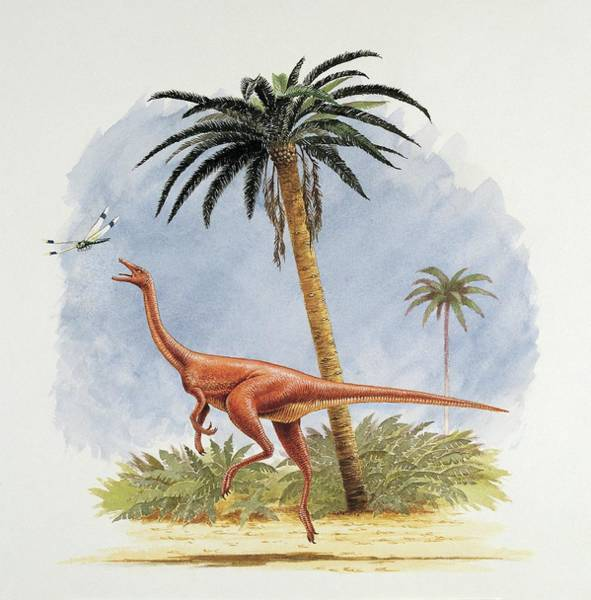 Cretaceous Wall Art - Photograph - Dinosaur Chasing A Fly by Deagostini/uig/science Photo Library