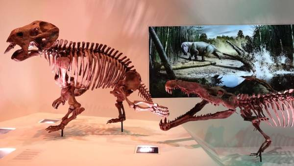 Photograph - Dinosaur Fossils by Dan Sproul