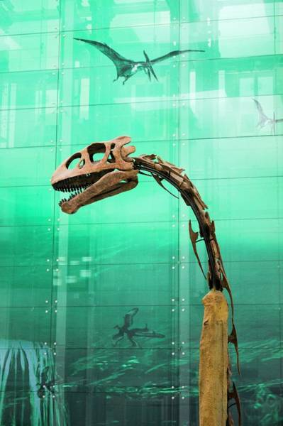 Wall Art - Photograph - Dinosaur Skeleton. by Mark Williamson/science Photo Library
