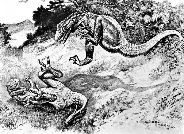 Photograph - Dinosaurs Fighting by Science Source