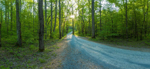 The Great Smoky Mountains Wall Art - Photograph - Dirt Road Passing Through A Forest by Panoramic Images