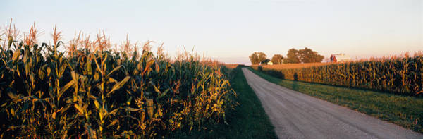 Wall Art - Photograph - Dirt Road Passing Through Fields by Panoramic Images