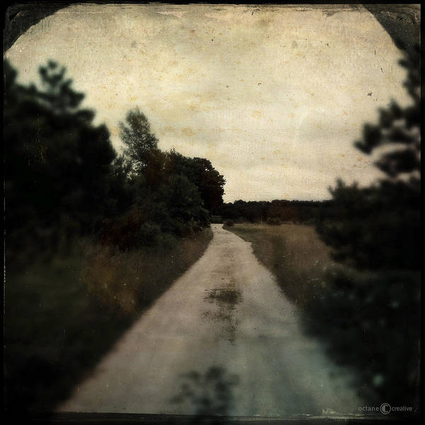Photograph - Dirt Road To Orchard by Tim Nyberg