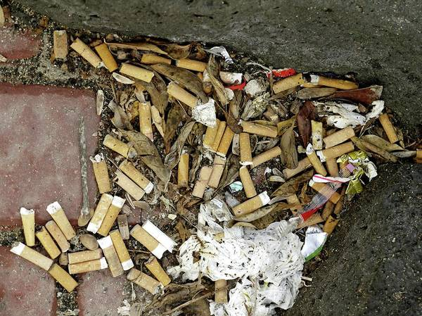But Photograph - Discarded Cigarette Butts by Tony Craddock/science Photo Library