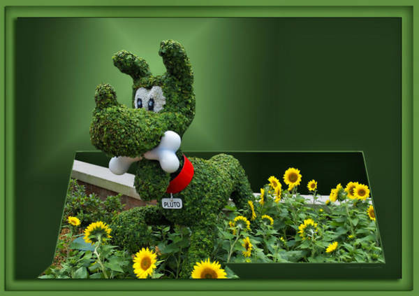 Wall Art - Photograph - Disney Floral 04 Pluto by Thomas Woolworth