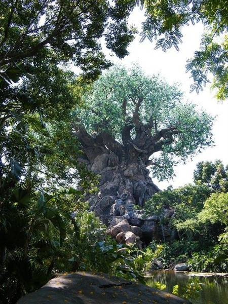 Photograph - Disney Tree Of Life by Ronda Douglas