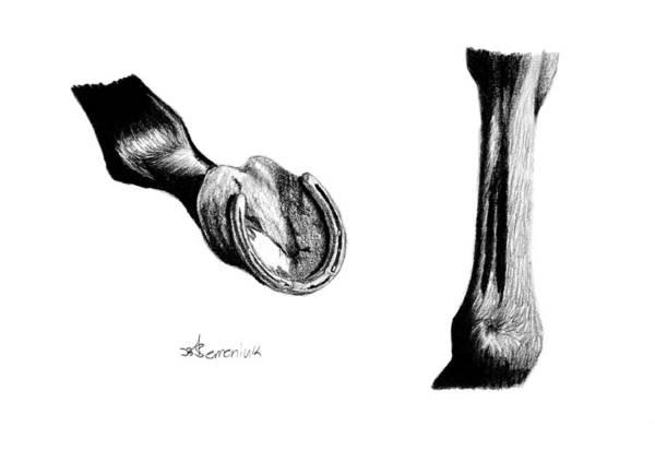 Hoof Drawing - Display The Frog by Kayleigh Semeniuk