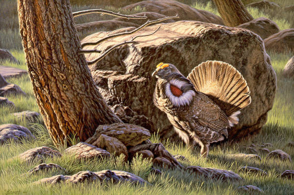 Wall Art - Painting - Displaying--blue Grouse by Paul Krapf