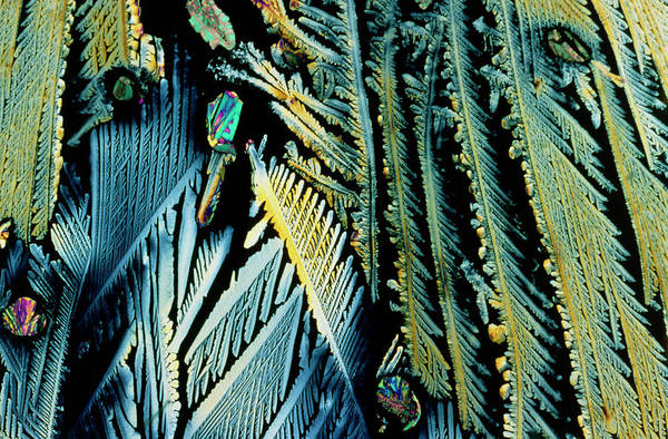 Dendrite Wall Art - Photograph - Distalgesic Drug Crystals by Sidney Moulds/science Photo Library