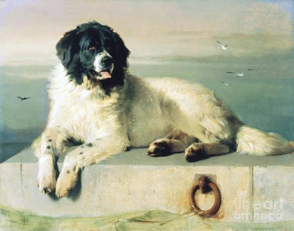 Landseer Wall Art - Painting - Distinguished Member Of The Humane Society by Pg Reproductions