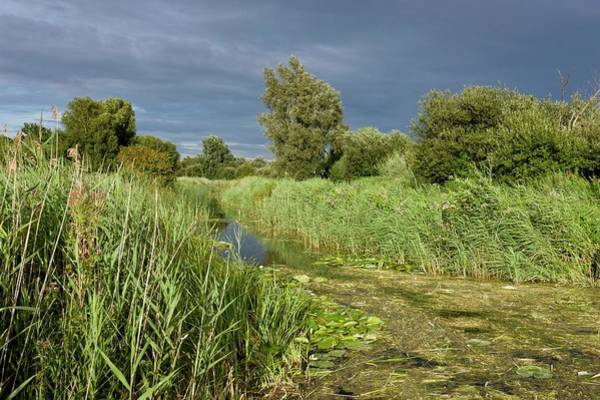 Wall Art - Photograph - Ditch And Reedbeds by Bob Gibbons