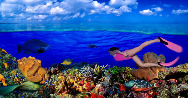 Eels Photograph - Diver Along Reef With Parrotfish, Green by Panoramic Images