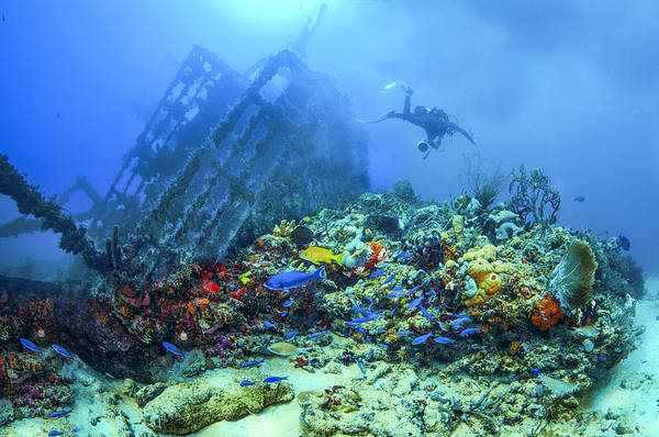Boynton Photograph - Diver At The Wreck by Debra and Dave Vanderlaan