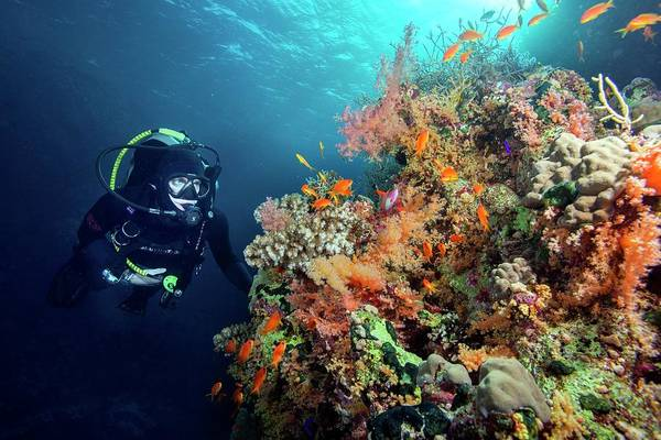 Wetsuit Wall Art - Photograph - Diver With Corals And Reef Fish by Louise Murray