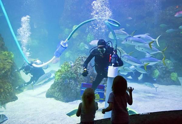 Fish Tank Photograph - Divers Cleaning Aquarium Tank by Jim West