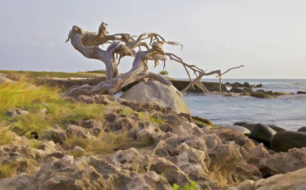 Photograph - Divi Divi Tree On The Coastline Of Aruba by David Letts